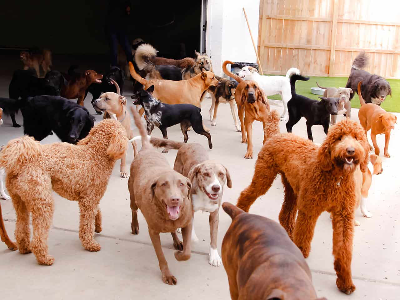 Arkansas's Best Doggie Daycare
