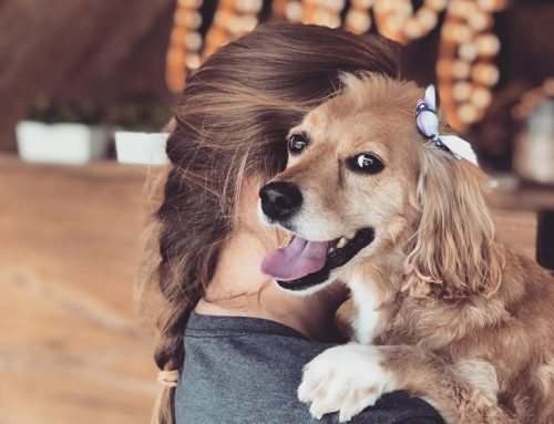 7 Super Easy and Affordable Ways to Spoil Your Dog