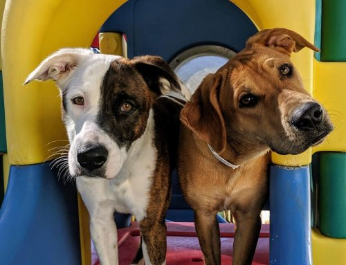 How Doggie Daycare Can Help Your Dog's Separation Anxiety