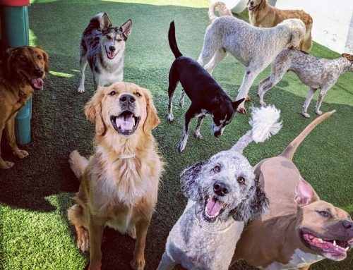 Why Dogs Go Crazy for Their Neighborhood Pet Resort